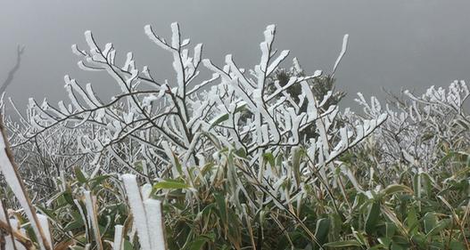 Băng tuyết tuyệt đẹp ở Sa Pa khiến du khách thích thú