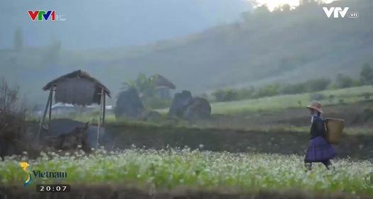 Đến Mộc Châu mùa hoa cải