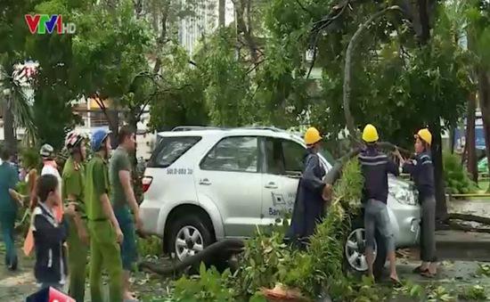 TP.HCM: Cây đổ trúng ô tô, tài xế may mắn thoát nạn