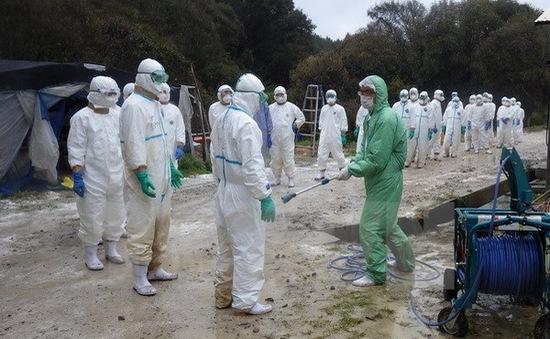 Nhật Bản tiêu hủy 4.000 con gia cầm do phát hiện cúm H5