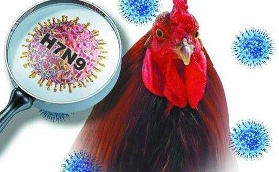 Trung Quốc: Thêm 2 trường hợp nhiễm cúm A/H7N9