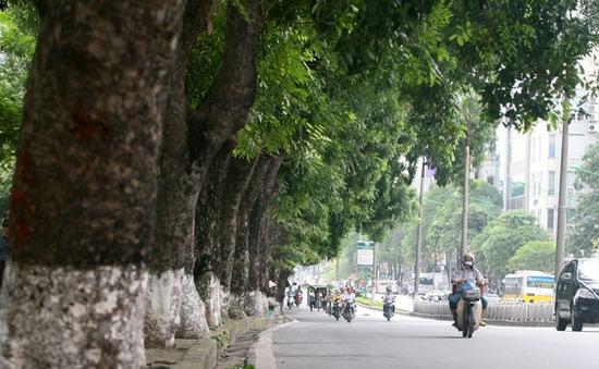 Người Hà Nội tiếc nuối vì hàng cây cổ thụ sắp bị chặt hạ