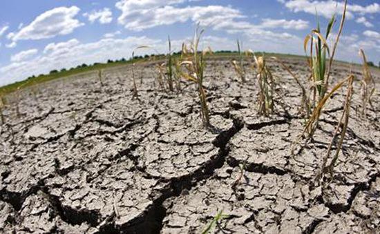 Biến đổi khí hậu ảnh hưởng trầm trọng đến ngành nông nghiệp