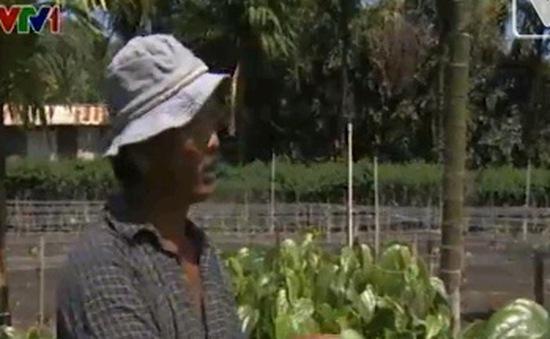 Làm vườn - nghề phổ biến của người Việt tại Hawaii