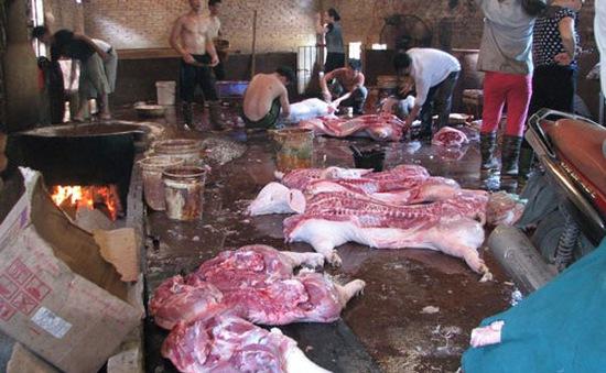 Khánh Hòa: Hỗ trợ các cơ sở giết mổ gia súc, gia cầm vào khu tập trung