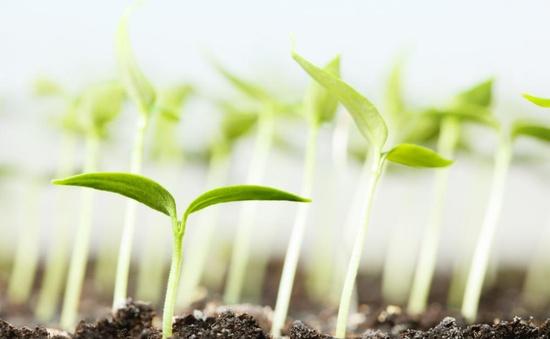 """""""Hướng tới một nền sản xuất nông nghiệp xanh, bền vững"""""""
