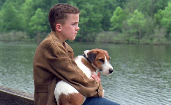 """Nhẹ nhàng và sâu lắng với """"Chú chó Kip"""" (17h00, HBO)"""