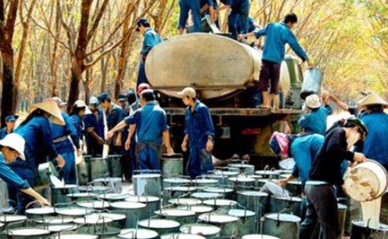 Những sai phạm nghiêm trọng của Tập đoàn công nghiệp Cao su VN
