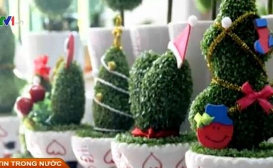 """""""Cơn sốt"""" cây cảnh mini mùa Giáng sinh"""