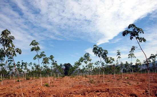 Campuchia đánh giá cao dự án cao su của Việt Nam