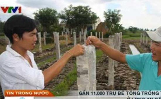 Gần 11.000 trụ bê tông trồng thanh long tự ngã đổ
