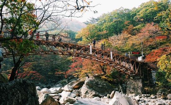 Hành trình đến với thiên đường mùa thu ở Hàn Quốc
