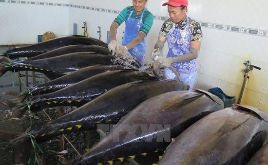 Sản lượng cá ngừ sụt giảm do El Nino