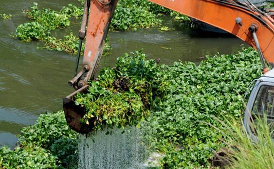 Triển khai vớt và xử lý lục bình trên các kênh rạch