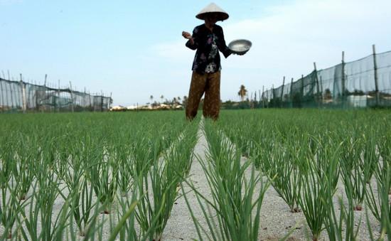 """""""Già hóa"""" nông thôn - Thách thức cho ngành nông nghiệp"""