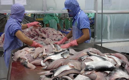 Cá da trơn Việt nhọc nhằn đường vào Mỹ