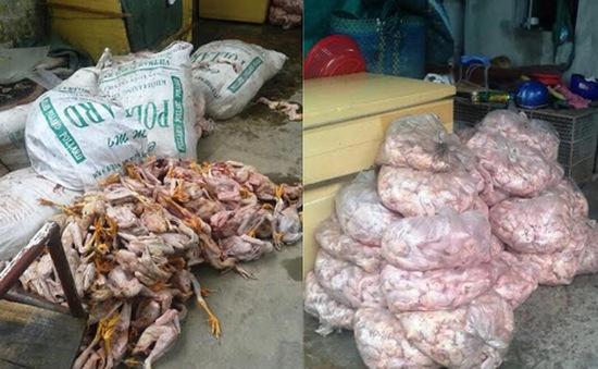 Đồng Tháp: Bắt giữ hơn 1 tấn thịt gà không rõ nguồn gốc