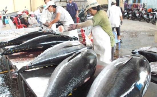 Sơ kết 1 năm thực hiện đề án chuỗi giá trị cá ngừ