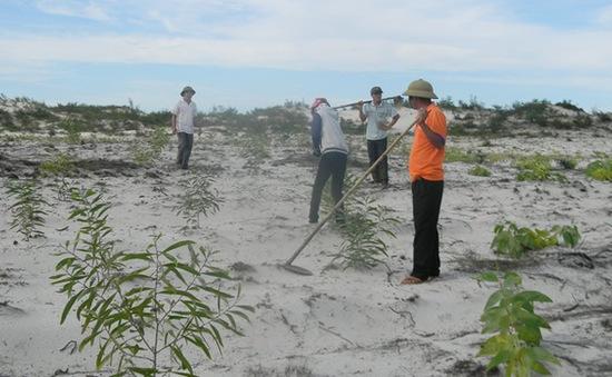 Ninh Thuận trồng rừng phòng hộ ven biển chống sa mạc hóa