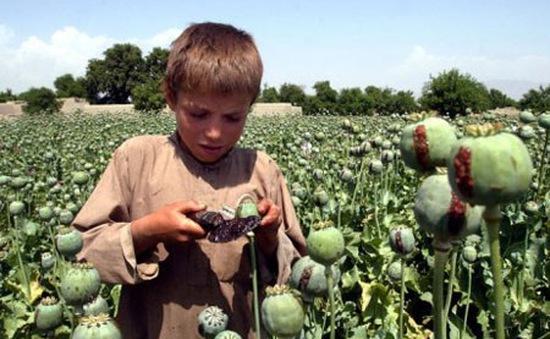 Những đứa trẻ lớn lên cùng ma tuý tại Afghanistan