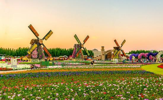 Choáng ngợp vườn hoa lớn nhất thế giới giữa sa mạc ở Dubai