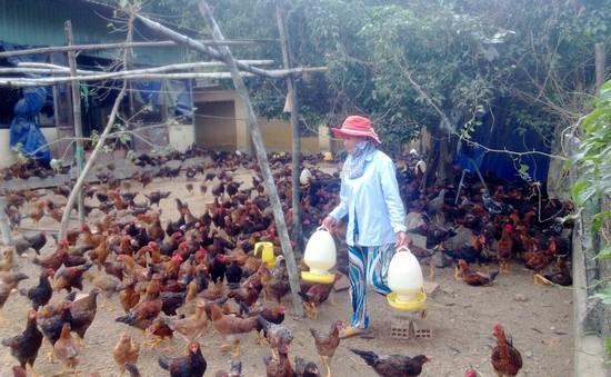 Tăng cường giám sát dịch bệnh trong chăn nuôi