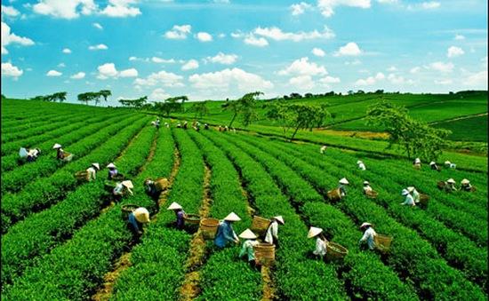 Tìm kiếm các giải pháp tài chính cho 'tăng trưởng xanh'