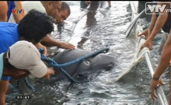 Ngư dân Philippines hào hứng khi bắt được cá mập quý