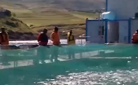 Nuôi cá hồi trên… núi tại Nam Phi