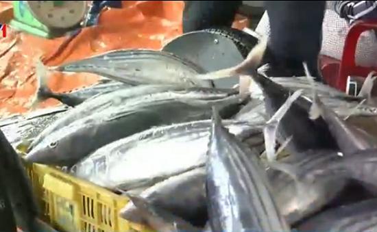 Ngư dân Nam Trung Bộ  vui mừng trước mùa cá bội thu
