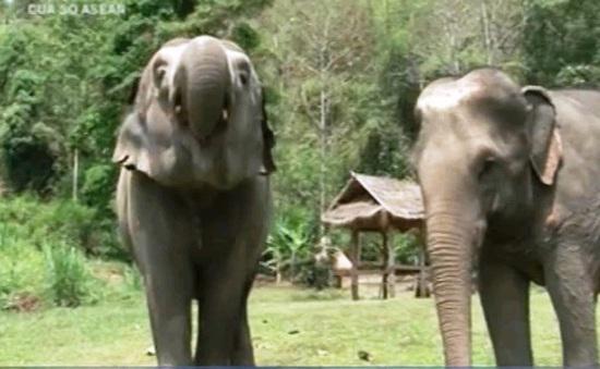 Độc đáo cà phê voi tại Thái Lan