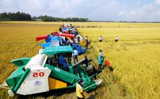 Đồng Nai đầu tư 42 tỷ đồng xây dựng cánh đồng lớn