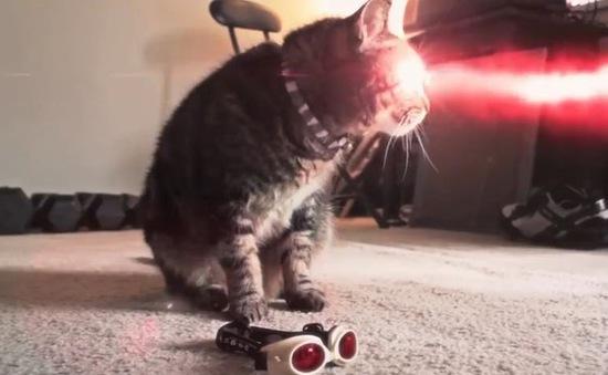 """Khả năng tàn phá của những chú mèo """"đột biến"""""""