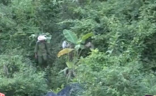 Người dân Quảng Bình ồ ạt khai thác cây rừng