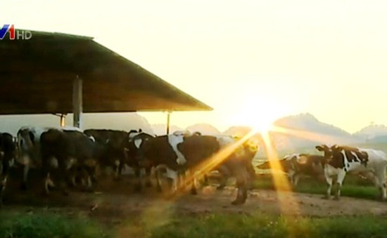 Thêm 45 triệu USD tài trợ cho ngành chăn nuôi và ATTP