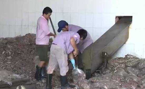 Bà Rịa - Vũng tàu sẽ xóa sổ nghề chế biến bột cá