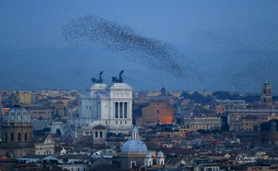 Thủ đô Rome (Italy) tối sầm vì bị chim sáo tấn công