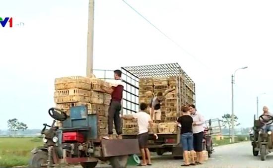 Chợ gà tự phát được địa phương hậu thuẫn?