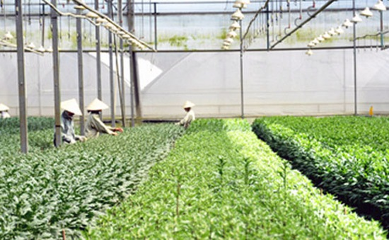 Ứng dụng công nghệ sinh học trong nông nghiệp ở Đà Nẵng