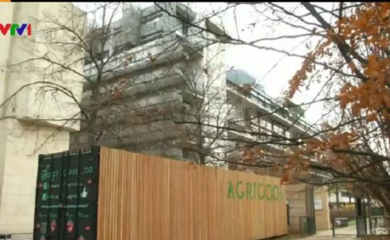 Sáng kiến trồng cây trong container sinh thái tại Pháp
