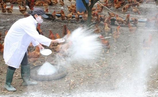 Dịch cúm gia cầm A/H5N6 xuất hiện ở Nam Định