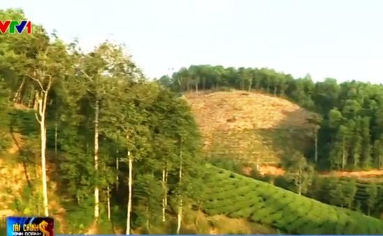 Hàng trăm nghìn ha đất nông lâm trường đang bị lấn chiếm