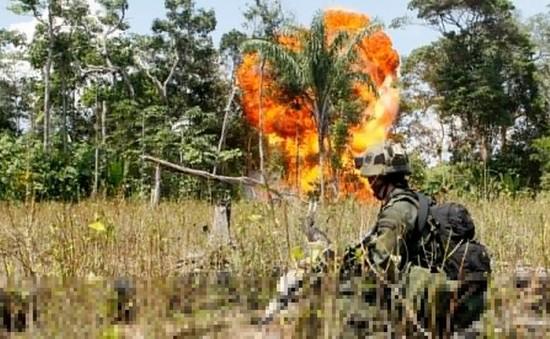 Colombia: Giao tranh ác liệt giữa quân Chính phủ và FARC