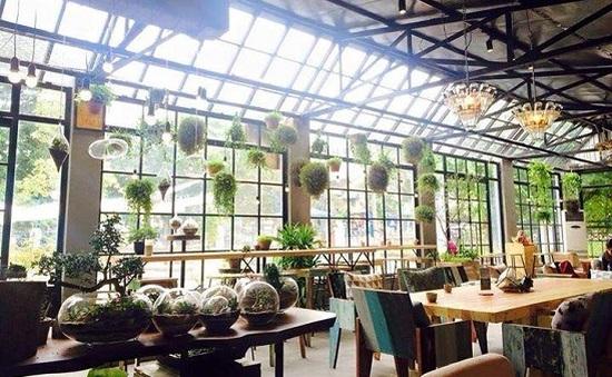 Giới trẻ Hà thành thích thú với quán cà phê cây xanh độc đáo