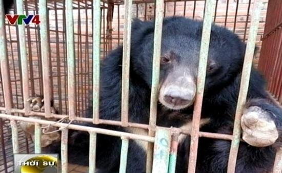 Việt Nam cam kết không sử dụng mật gấu trong Đông y
