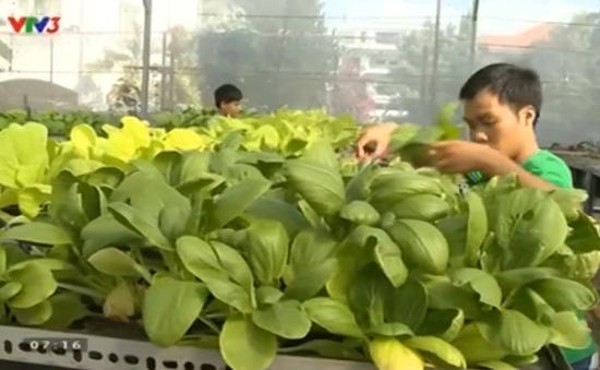 Phát triển mô hình trang trại rau hữu cơ ở TP HCM