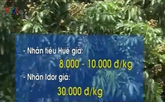 ĐBSCL: Giá nhãn trái mùa tăng cao