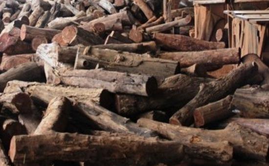 Phát hiện hàng trăm khối gỗ lậu tại Đồng Nai