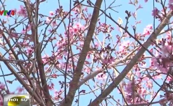 Vẻ đẹp tinh tế của hoa Đà Lạt trong tranh