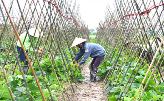 Nông dân hết mặn mà với hợp tác xã nông nghiệp?